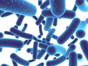 Bioflor7 Probiotic