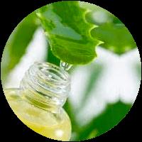 Aloe Vera - Bioflor7
