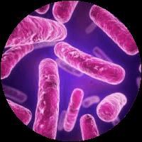 Bacteria - Bioflor7