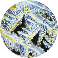 Vitamin B - Bioflor7